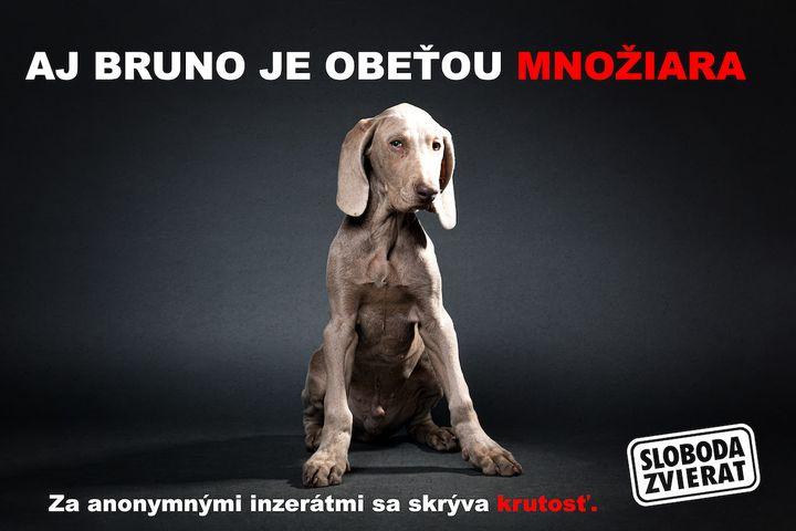 V dnešnom newslettri Vás žiadame o podpis výzvy za obmedzenie anonymného predaja šteniat na internete. Pomôžte nám zastaviť množ…