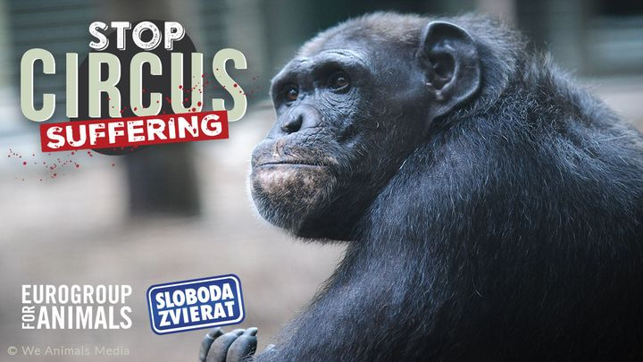 🔔⏱ Priateľky, priatelia, POSLEDNÁ ŠANCA PODPÍSAŤ PETÍCIU, ktorou žiadame zákaz divožijúcich zvierat v cirkusoch v celej EÚ!  ✍️ …