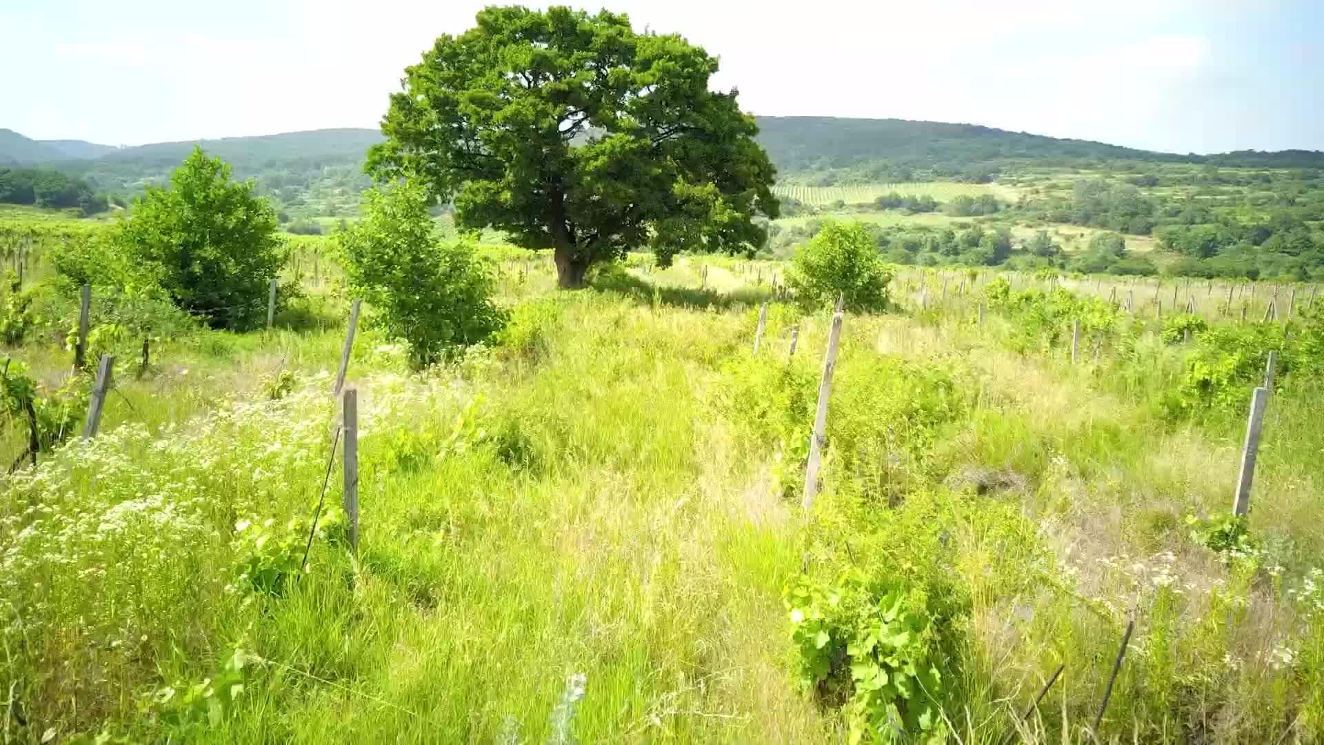 🌳  HLASOVANIE O STROM ROKA KONČÍ 🌳   Koniec septembra sa blíži, a to znamená, že končí aj 19. ročník ankety strom roka, ktorú …