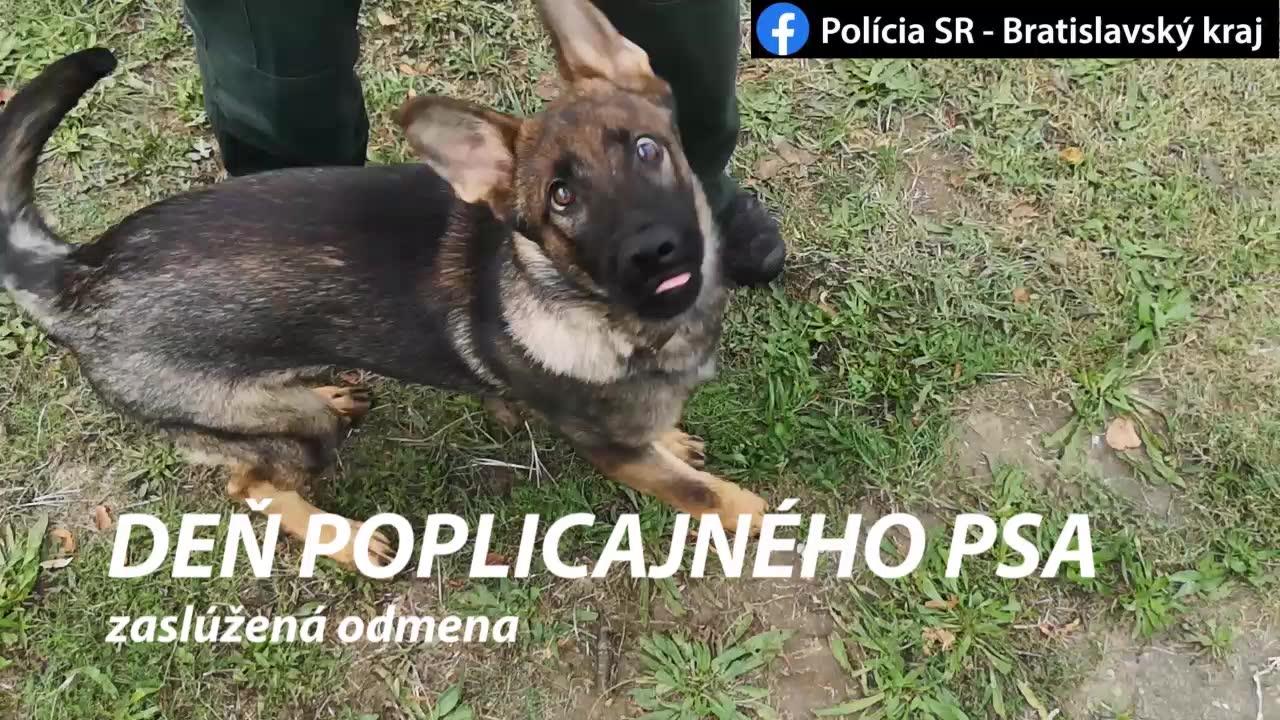deň policajného psa 3