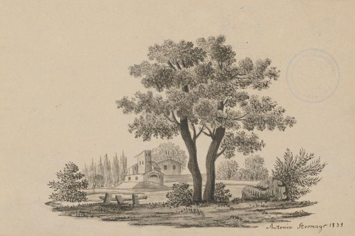 Práce na papieri tvoria zásadnú časť zbierky GMB. Aj preto je dnes dôležité pripomenúť si Medzinárodný deň stromov.  Dielo Anton…