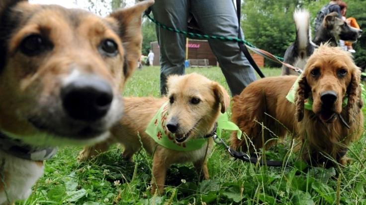 Kruté podmienky i fatálne zdravotné problémy. Sloboda zvierat upozorňuje na množiarne psov – TA3